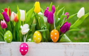Img Fiori Pasqua 2018